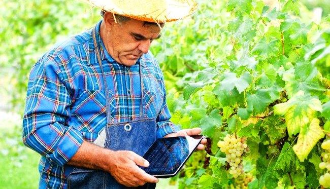 高齢者比率50%以上の町で平均年齢70歳以上のスマート農業。株式会社いろどりが農業を変える!