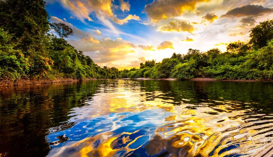 アマゾンの木々は「自力で雨季を呼ぶ」ことが判明 驚きのメカニズムとは?