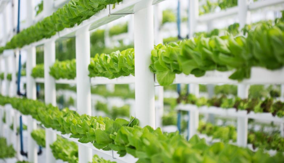 宇宙でもレタス栽培が可能に!野菜を畑ではなく工場で作るメリットとは?