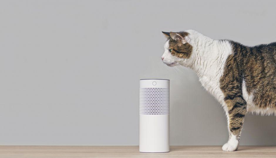 Amazon EchoのAIアシスタント「アレクサ」の浸透がもたらした意外な影響とは?