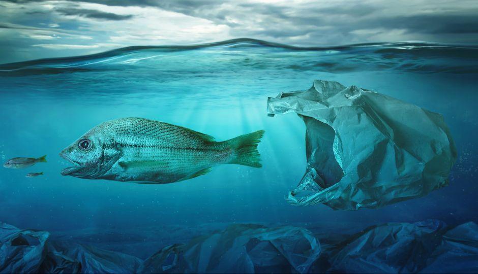 海中で分解される植物由来のレジ袋。しかし、環境保護の観点からは賛否両論?