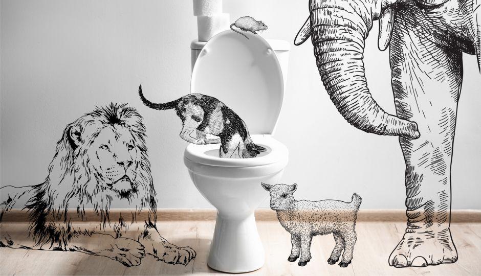 哺乳類が排尿にかける時間は体の大きさに比例しない!?なんでそんなことを研究したの?と思わず聞きたくなる面白研究あれこれ。